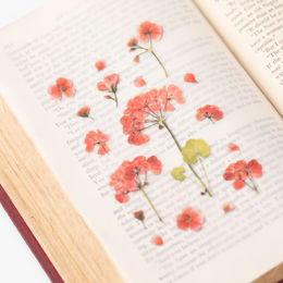 Appree | Pressed Flower Sticker Sheet: Geranium
