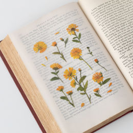 Appree | Pressed Flower Sticker Sheet: Calendula