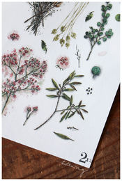 LCN | Print-on Stickers - Dried Flower