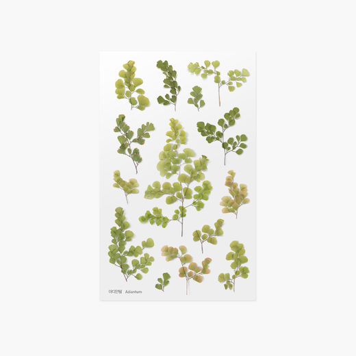 Appree | Pressed Flower Sticker Sheet: Adiantum