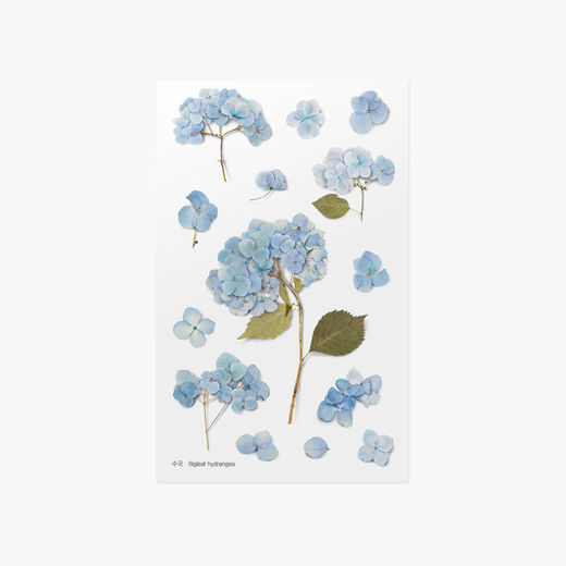 Appree | Pressed Flower Sticker Sheet: Bigleaf Hydrangea