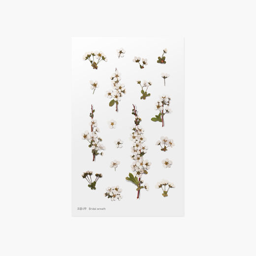 Appree | Pressed Flower Sticker Sheet: Bridal Wreath