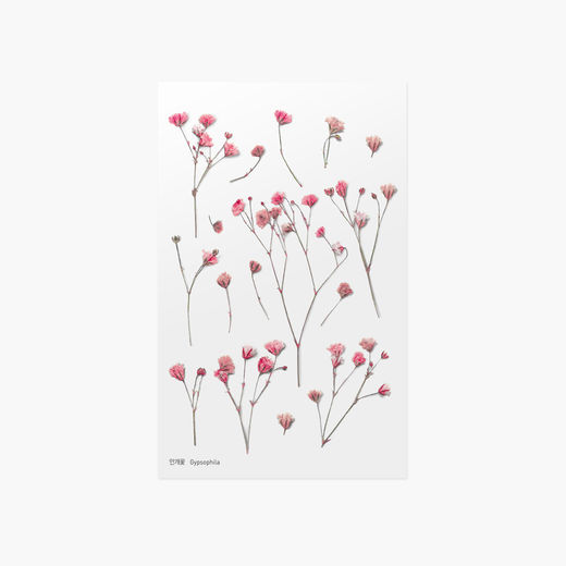 Appree | Pressed Flower Sticker Sheet: Gypsophila