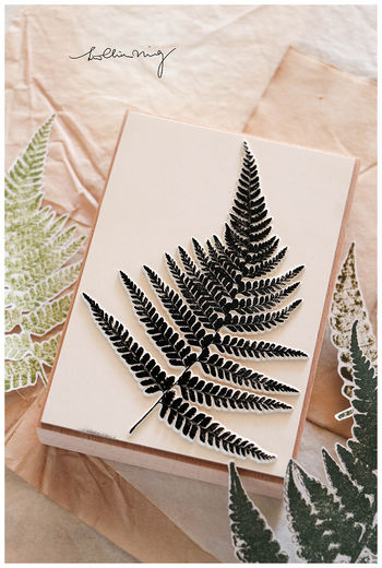 LCN | Fern Specimen stamp set B