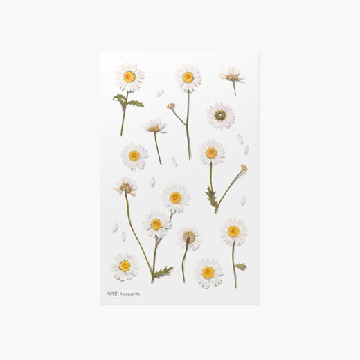 Appree | Pressed Flower Sticker Sheet: Marguerite