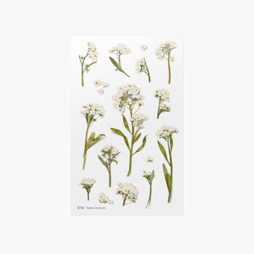 Appree | Pressed Flower Sticker Sheet: Sweet Alyssum