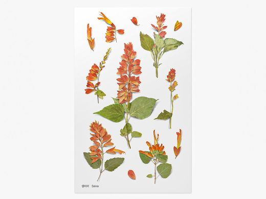 Appree | Pressed Flower Sticker Sheet: Salvia