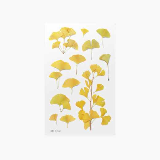 Appree | Pressed Flower Sticker Sheet: Ginkgo
