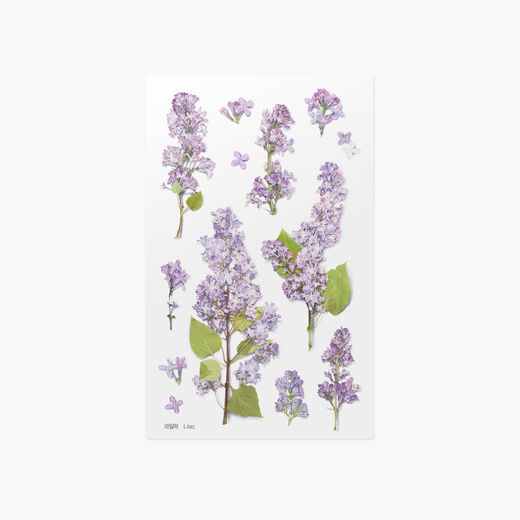 Appree | Pressed Flower Sticker Sheet: Lilac